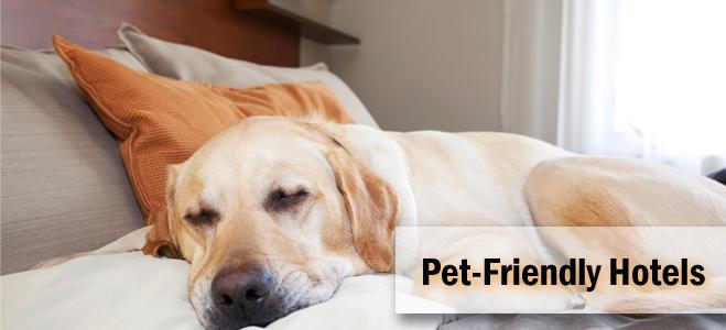 Hoteles amigables con Mascotas