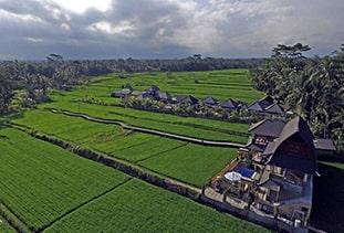 Umasari Rice Terrace Villa
